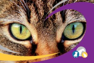 Tierheilpraktikerin Maria Witzig Schmaderer Logo